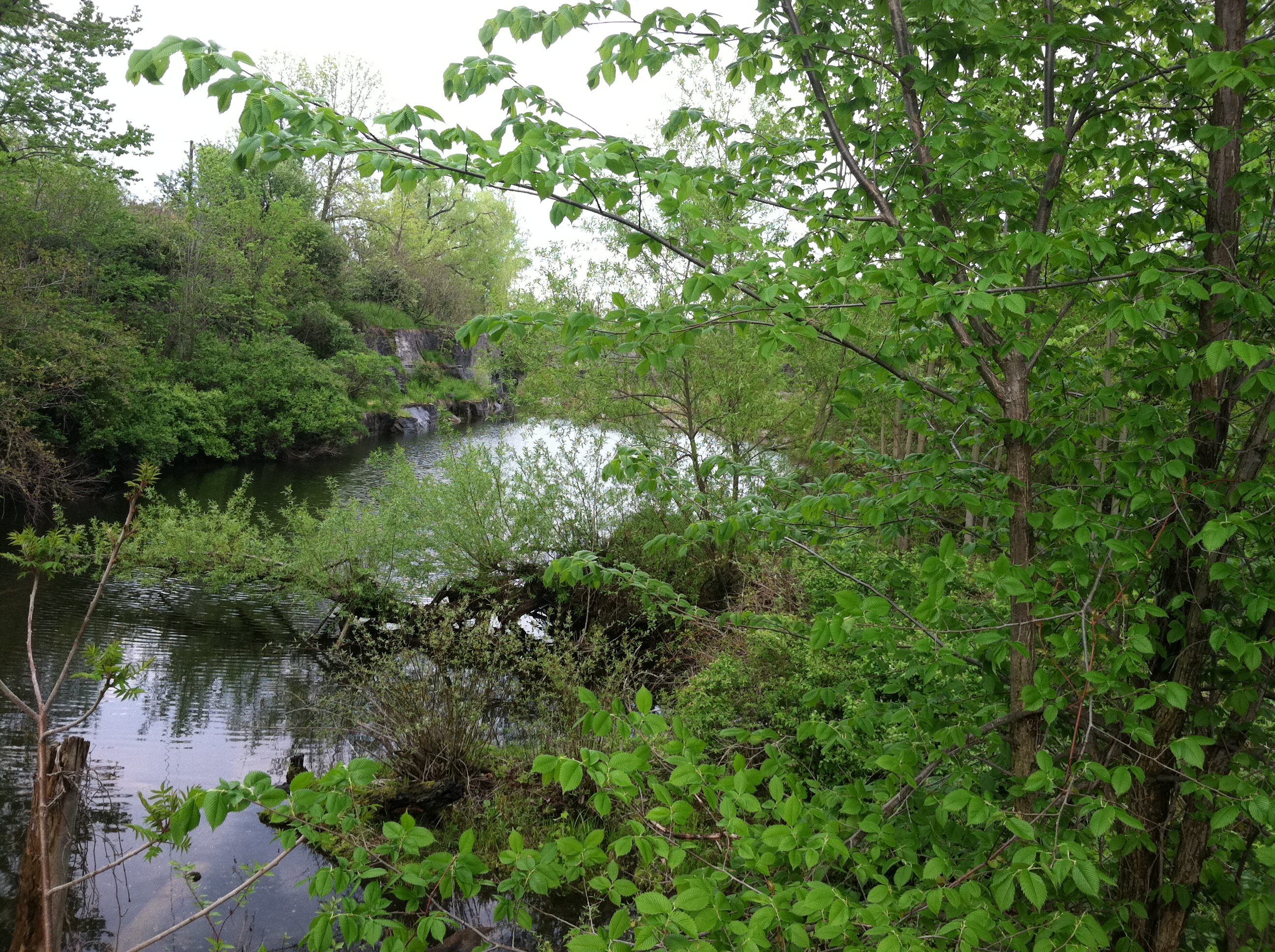 Beaver, muskrat, fish, turtles, salamanders, and a symphony of frogs have made homes in the old quarry.